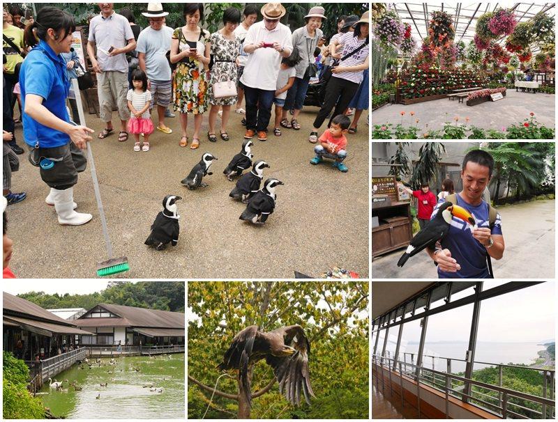 島根親子景點 松江花鳥園(貓頭鷹花園)  企鵝散步/餵大嘴鳥~山陰必去!超療癒可愛鳥兒相見歡