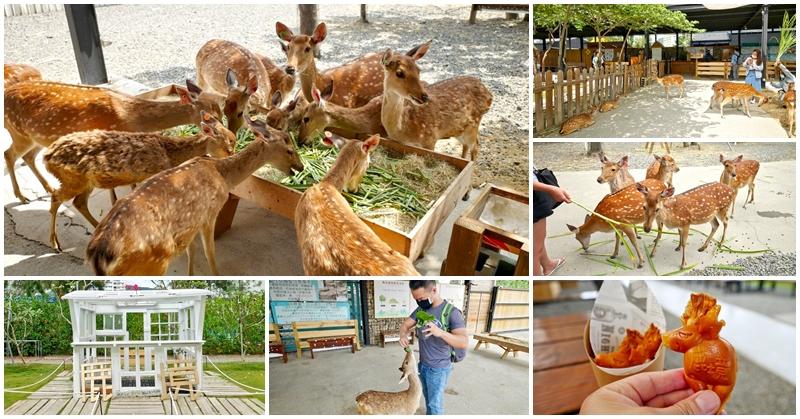 恆春墾丁親子景點 鹿境梅花鹿生態園區~不到奈良也能開心餵小鹿