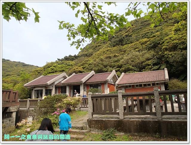 陽明山竹子湖海芋大屯自然公園櫻花杜鵑image063