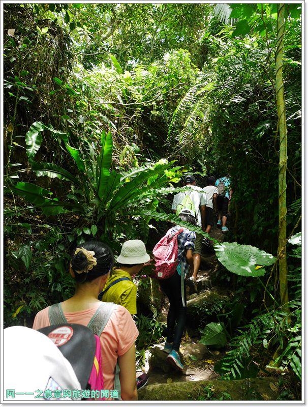 鸞山森林博物館.台東景點.祕境.會走路的樹.阿凡達image033