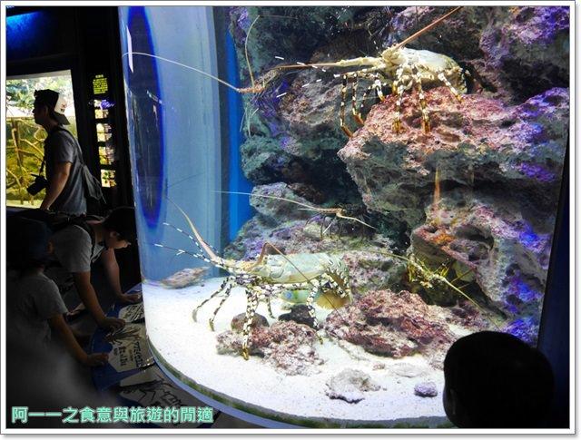沖繩美麗海水族館.海洋博紀念公園.海豚秀.親子旅遊image031
