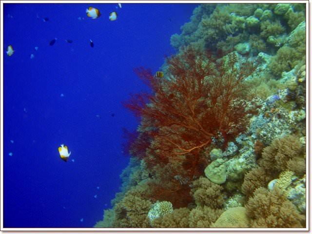 帛琉 大斷層 Big Drop Off 深藍與七彩的奇幻世界~阿一一帛琉藍色海洋之旅