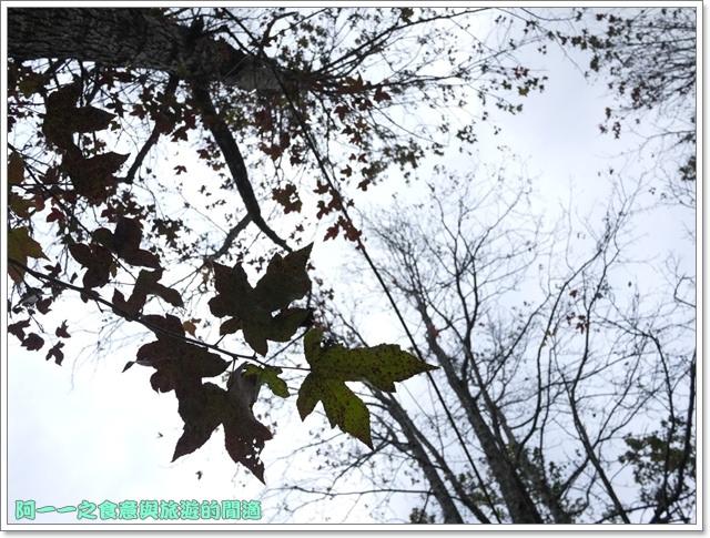image009初鹿牧場櫻花