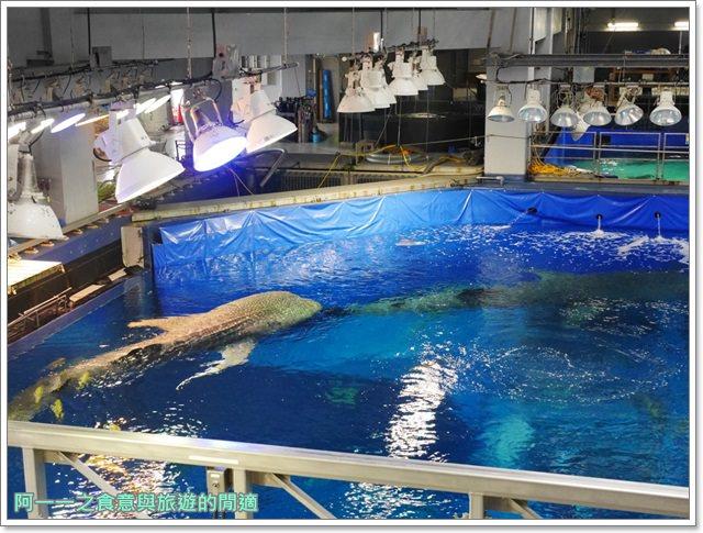 沖繩美麗海水族館.海洋博紀念公園.海豚秀.親子旅遊image055