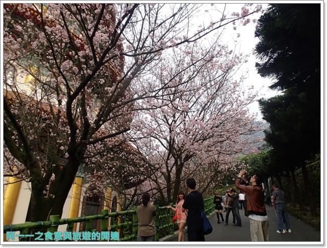 淡水天元宮吉野櫻花交通公車拍攝攻略懶人包image015