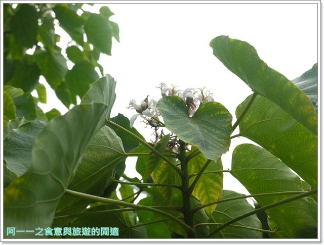花蓮吉安中園桐花步道鬱金香花園image027