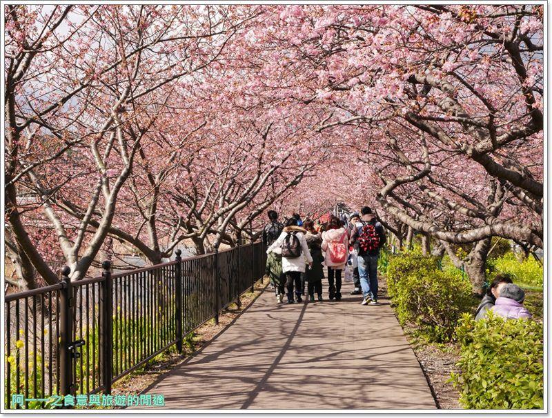 河津櫻.靜岡伊豆.日本自助旅遊.交通.攻略image024