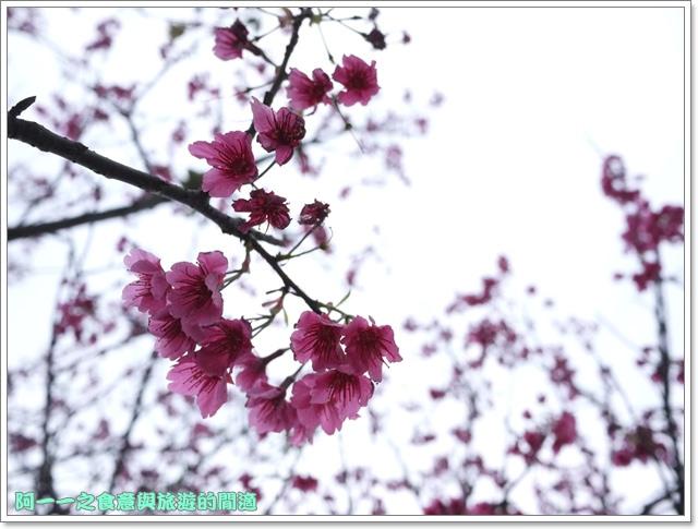 image057初鹿牧場櫻花