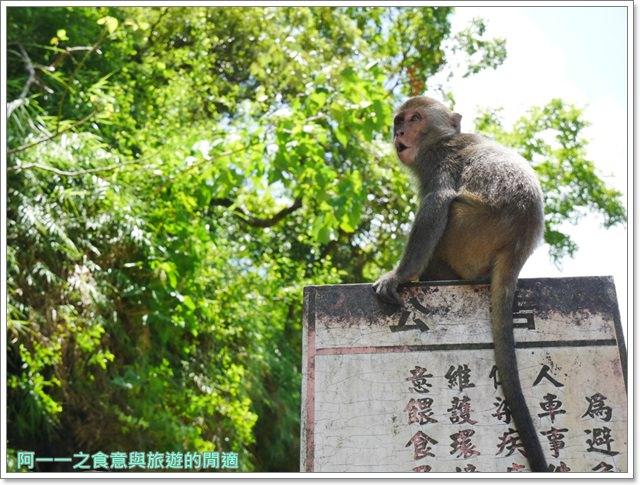 台東旅遊.泰源幽谷.登仙橋.台灣獼猴.東河橋.東部海岸image043