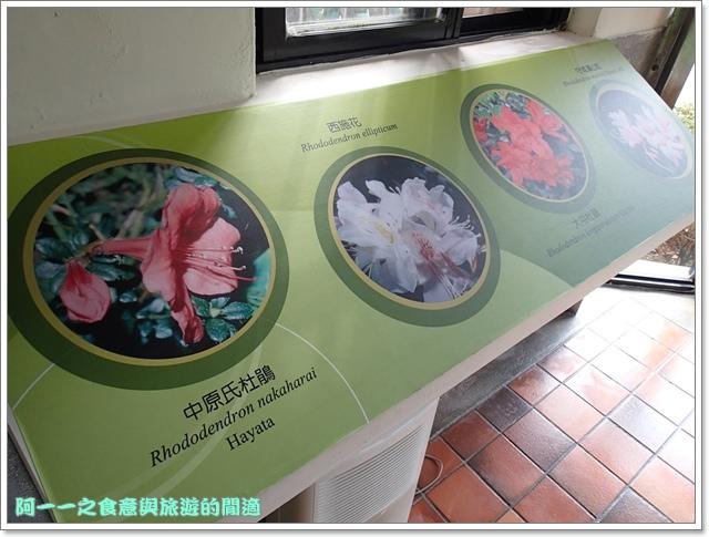 陽明山竹子湖海芋大屯自然公園櫻花杜鵑image071