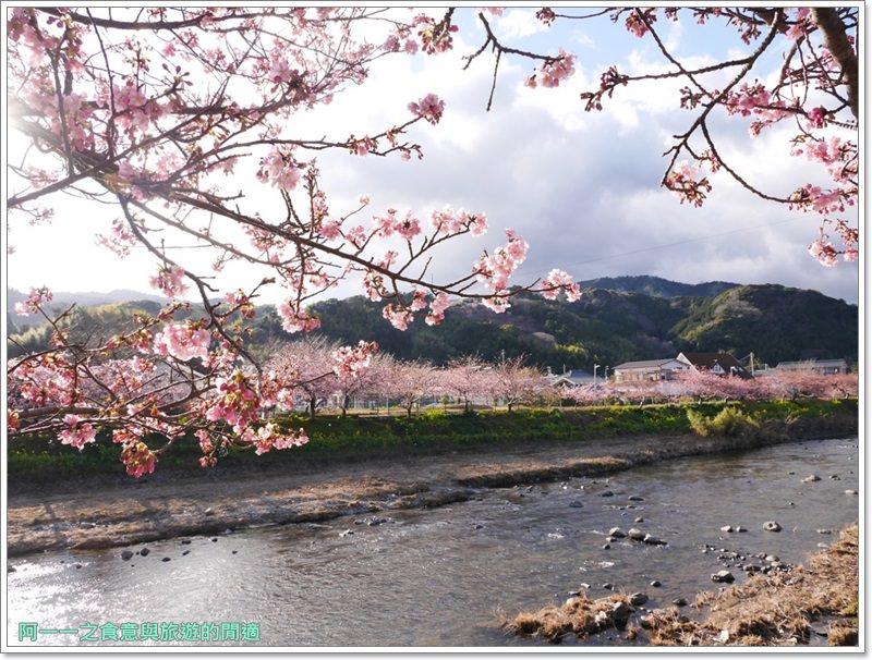 河津櫻.靜岡伊豆.日本自助旅遊.交通.攻略image059
