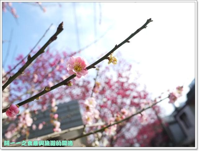 image091桃園客家文化館櫻花