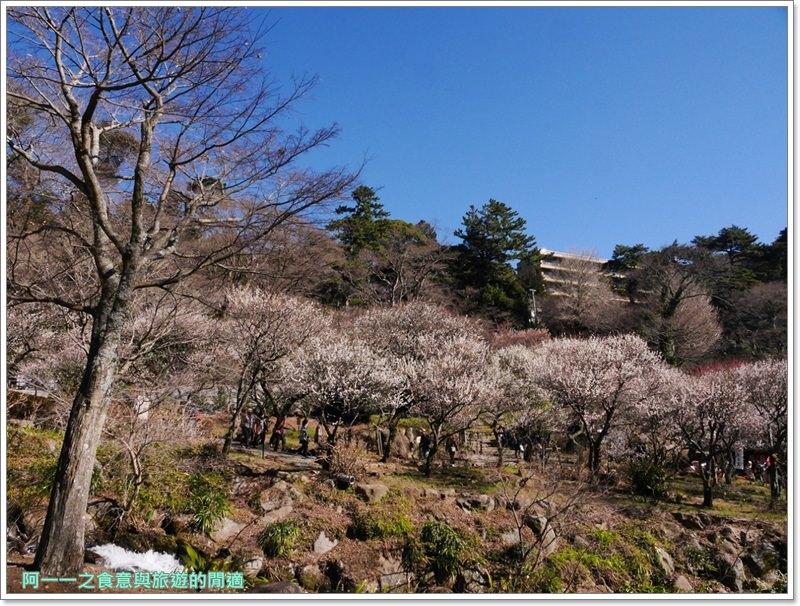 靜岡旅遊.熱海梅園.來宮站.賞花.梅花image038