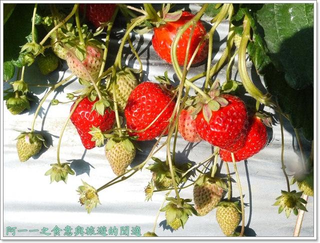 苗栗大湖草莓酒莊花間集image029