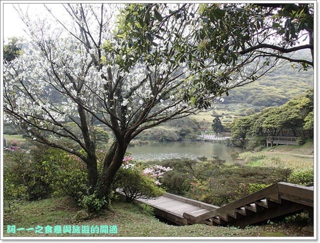 陽明山竹子湖海芋大屯自然公園櫻花杜鵑image035