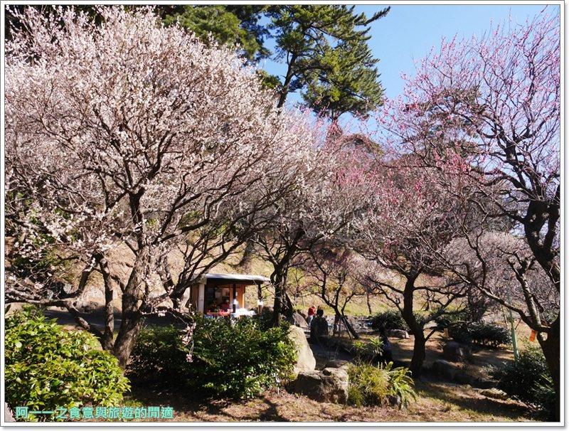 靜岡旅遊.熱海梅園.來宮站.賞花.梅花image024
