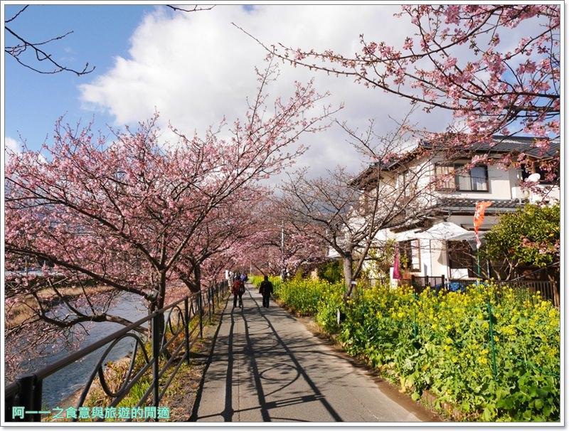 河津櫻.靜岡伊豆.日本自助旅遊.交通.攻略image041