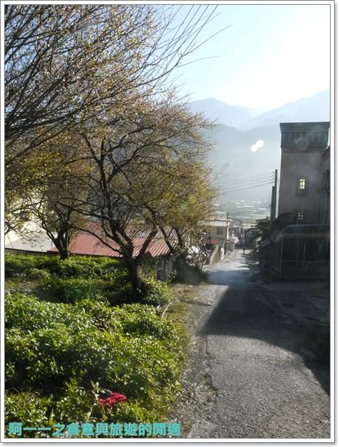 image063武界梅花