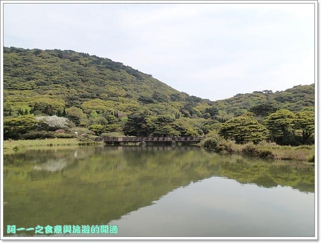 陽明山竹子湖海芋大屯自然公園櫻花杜鵑image011