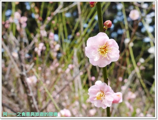 捷運中正紀念堂景點櫻花海綿寶寶暢遊比奇堡特展image075