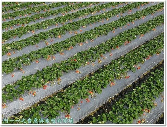 苗栗大湖草莓酒莊花間集image021