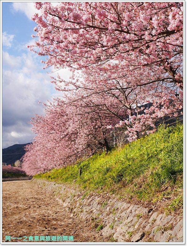 河津櫻.靜岡伊豆.日本自助旅遊.交通.攻略image062