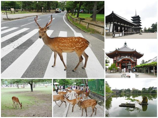 奈良.斑鳩一日卷.鹿.猿澤池.興福寺.五重塔page