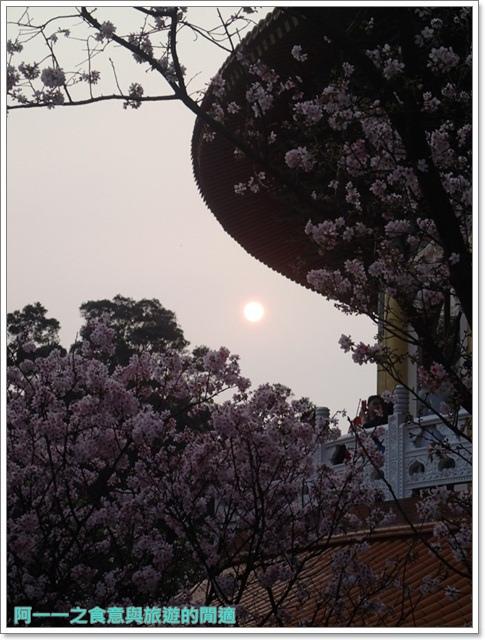 淡水天元宮吉野櫻花交通公車拍攝攻略懶人包image025
