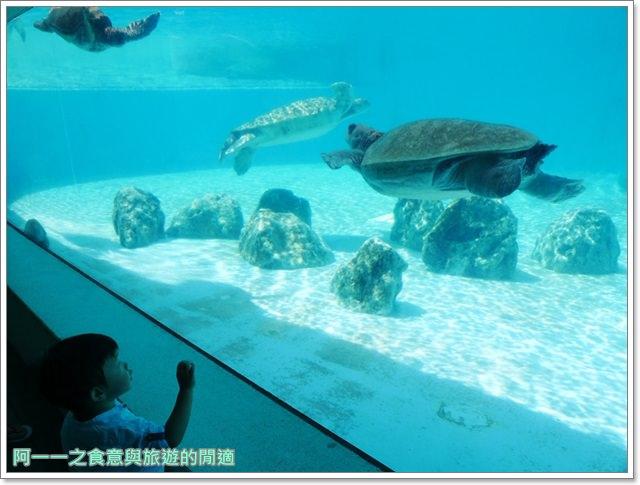 沖繩美麗海水族館.海洋博紀念公園.海豚秀.親子旅遊image069
