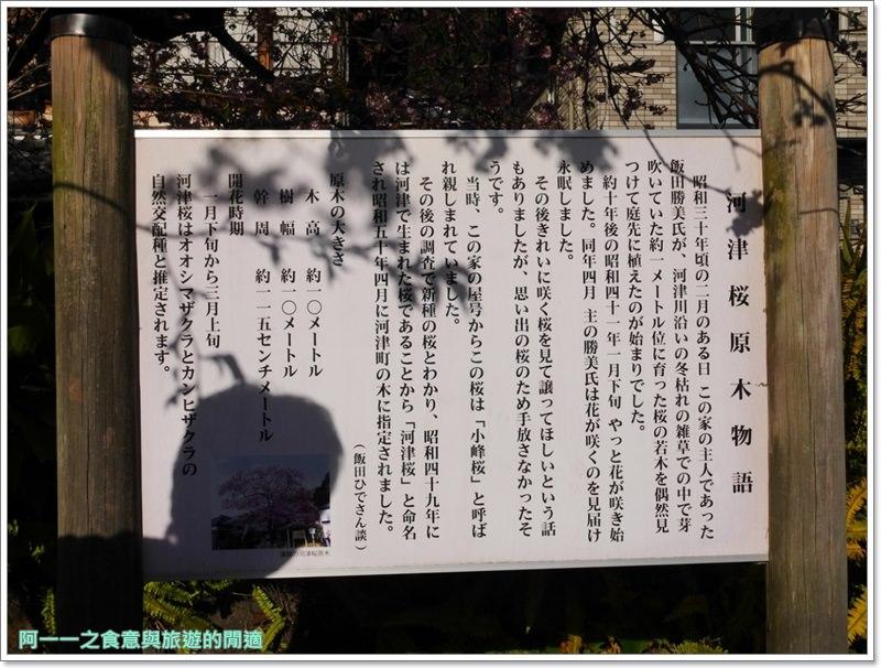 河津櫻.靜岡伊豆.日本自助旅遊.交通.攻略image056