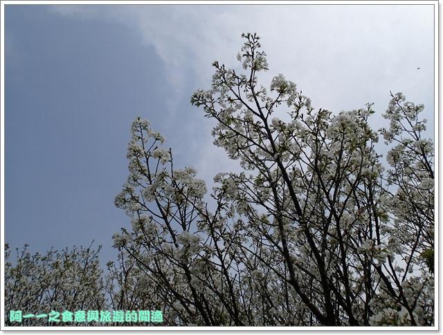 陽明山竹子湖海芋大屯自然公園櫻花杜鵑image055