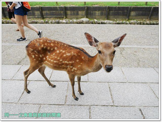 奈良.斑鳩一日卷.鹿.猿澤池.興福寺.五重塔image035