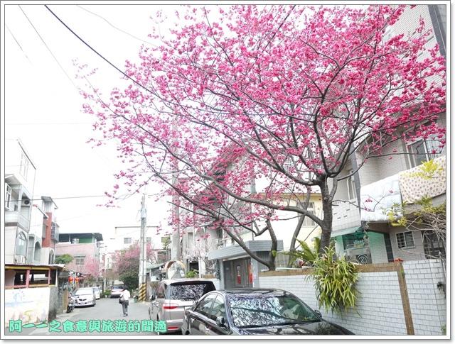 image077桃園客家文化館櫻花