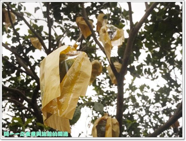 台東住宿民宿田裡的後院鹿野熱氣球image015