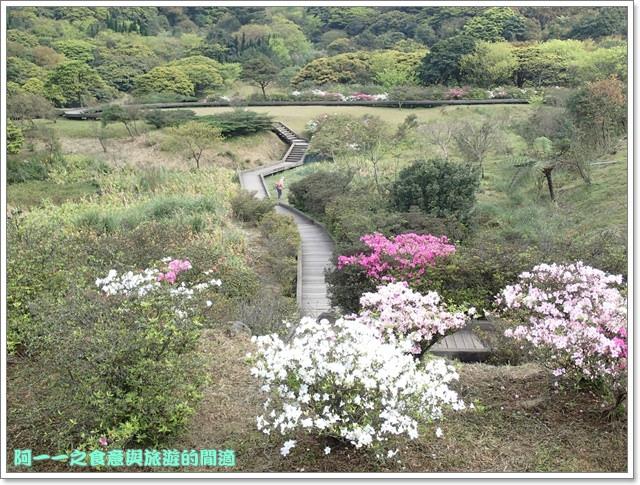 陽明山竹子湖海芋大屯自然公園櫻花杜鵑image015