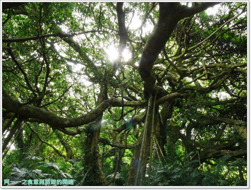 鸞山森林博物館.台東景點.祕境.會走路的樹.阿凡達image016