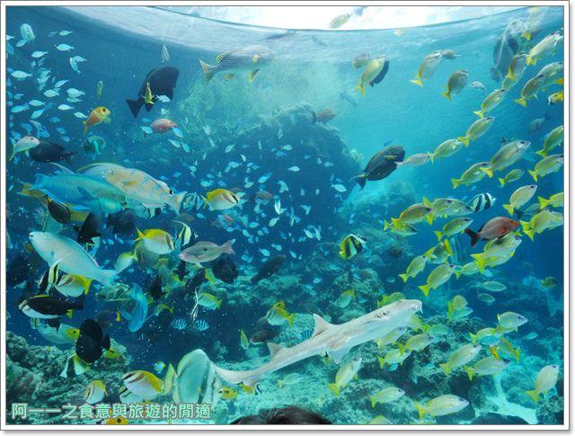 沖繩美麗海水族館.海洋博紀念公園.海豚秀.親子旅遊image026