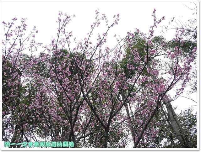 image013初鹿牧場櫻花