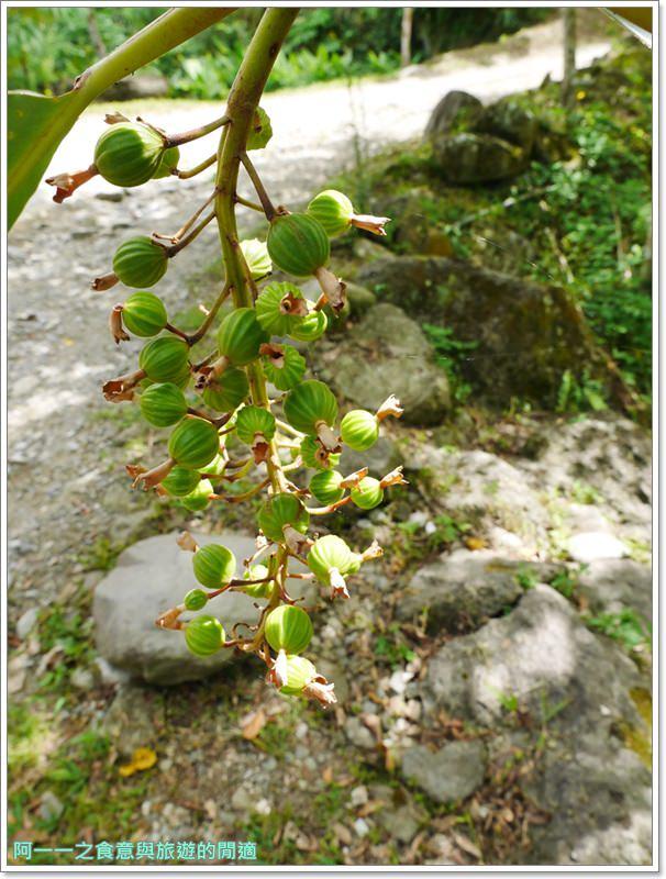 鸞山森林博物館.台東景點.祕境.會走路的樹.阿凡達image018