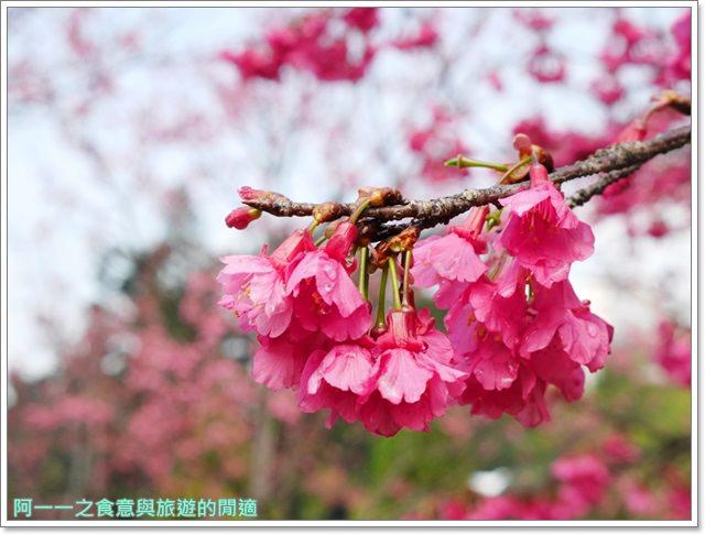 捷運中正紀念堂景點櫻花海綿寶寶暢遊比奇堡特展image056