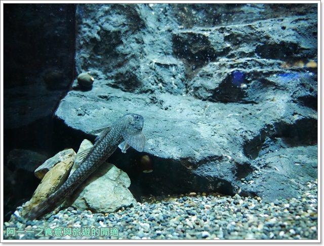 沖繩美麗海水族館.海洋博紀念公園.海豚秀.親子旅遊image033