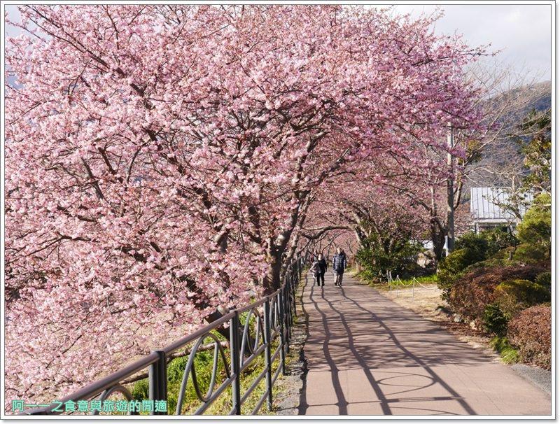 河津櫻.靜岡伊豆.日本自助旅遊.交通.攻略image043