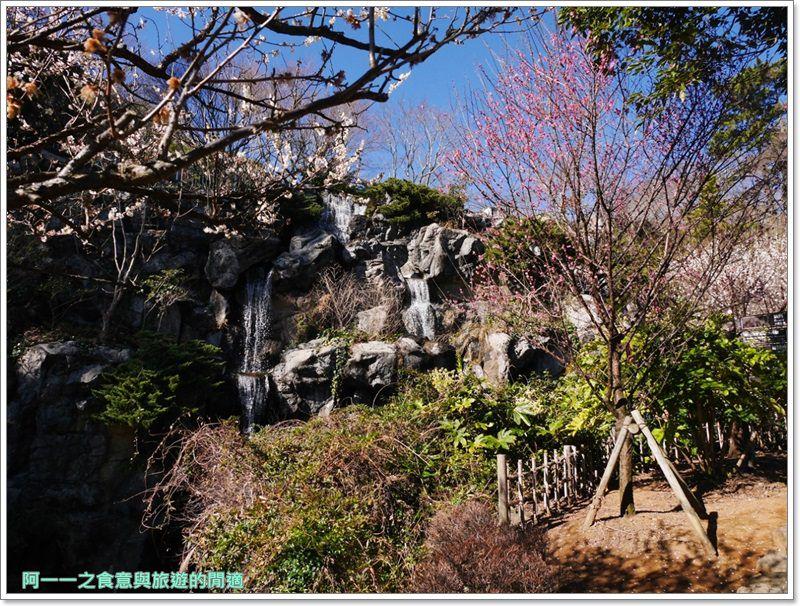 靜岡旅遊.熱海梅園.來宮站.賞花.梅花image027