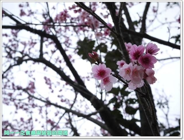 image065初鹿牧場櫻花