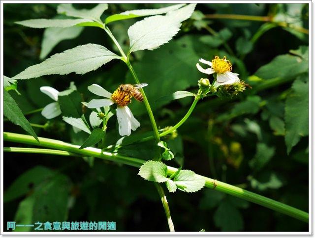 天溪園生態教育中心.陽明山國家公園.親子旅遊.台北好去處image041