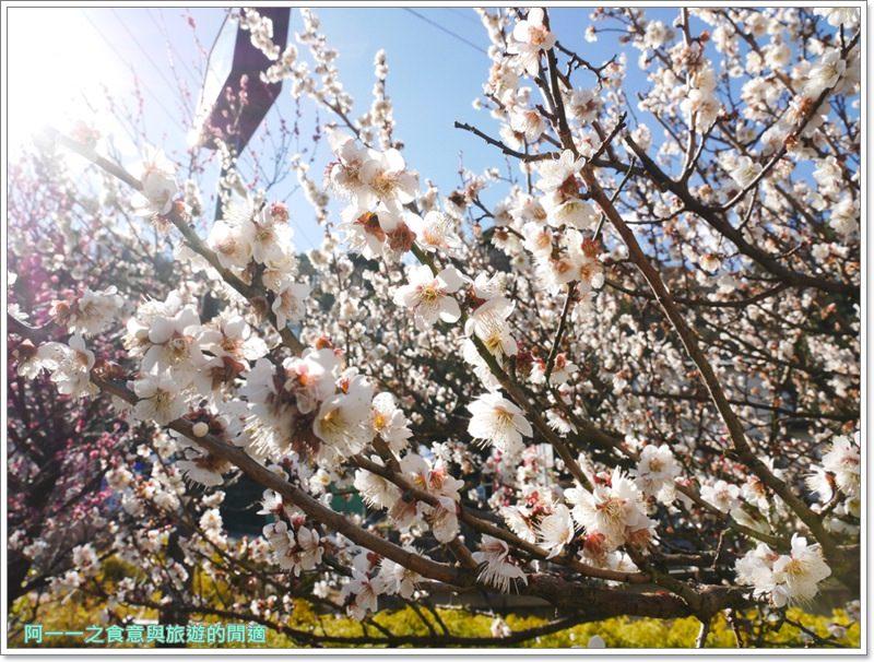 靜岡旅遊.熱海梅園.來宮站.賞花.梅花image028