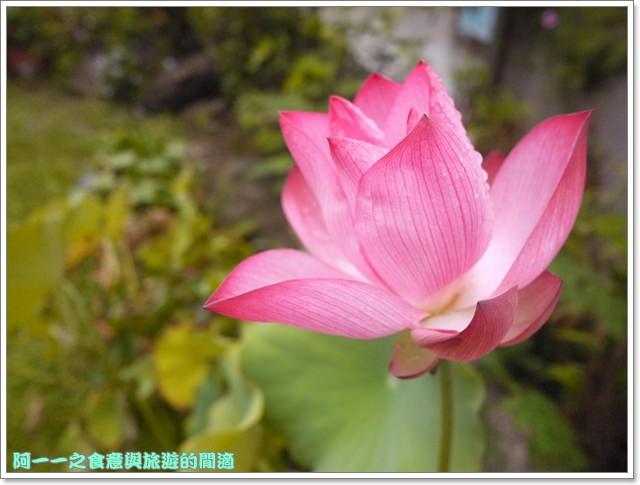 台東住宿民宿田裡的後院鹿野熱氣球image095