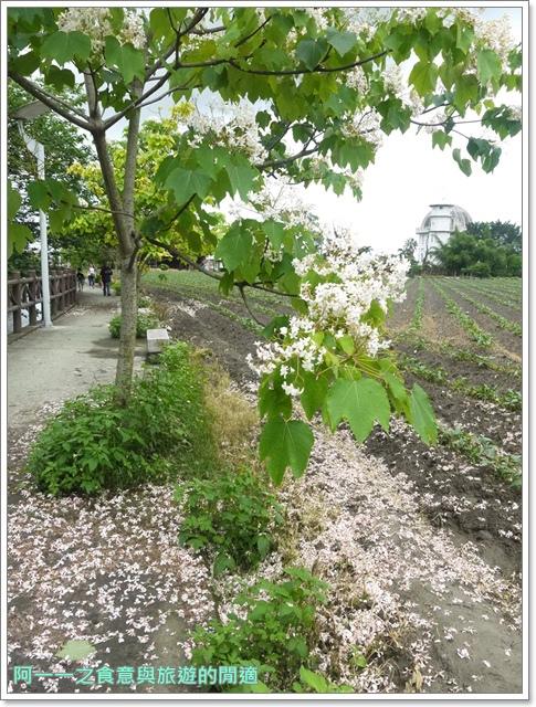 花蓮吉安中園桐花步道鬱金香花園image019