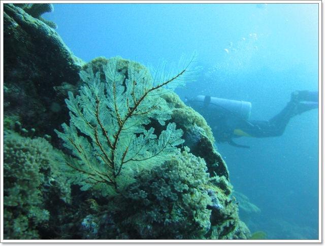 台東蘭嶼 母雞岩船潛~阿一一海寶蘭嶼潛水之旅