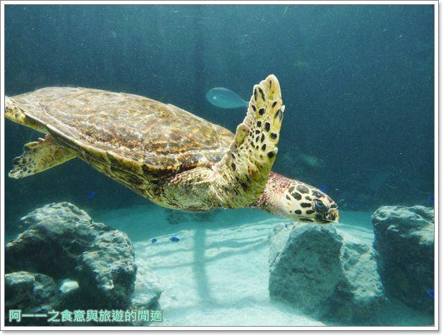 沖繩美麗海水族館.海洋博紀念公園.海豚秀.親子旅遊image070